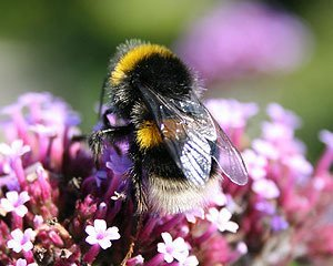 I have noticed nature more during lockdown - Bumblebees are the subject of some of my little lifts jewellery.