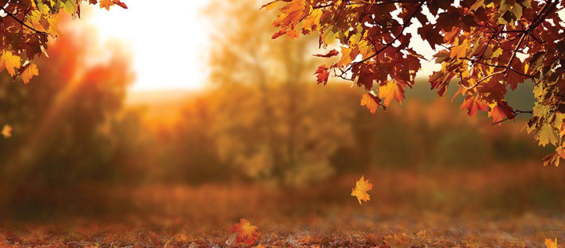 Autumn-Colours-Jewellery-Collection-Heidi-Kjeldsen2020C